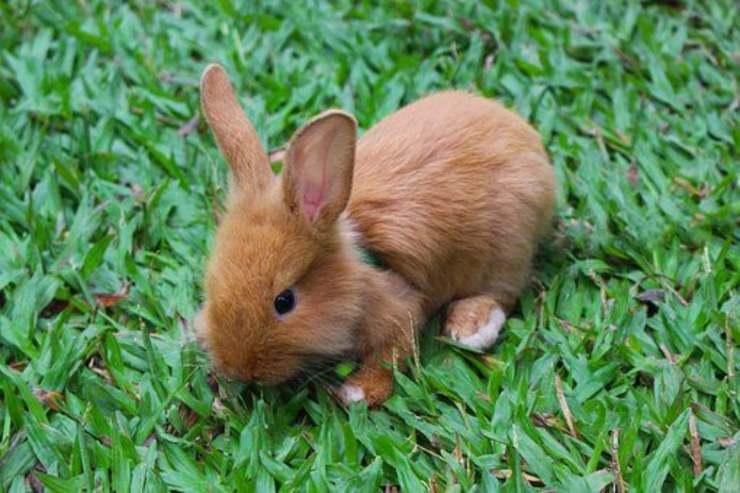 coniglio coniglietto