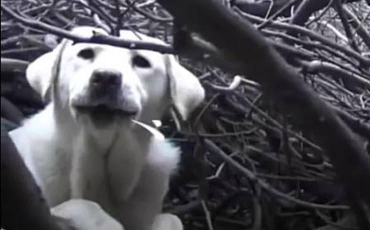 La cagnolina lancia l'allarme (Foto video)