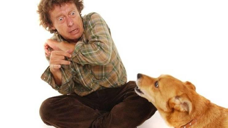 superare paura cani