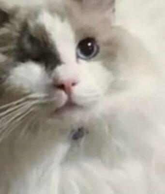 Il gatto Odin (Foto video)