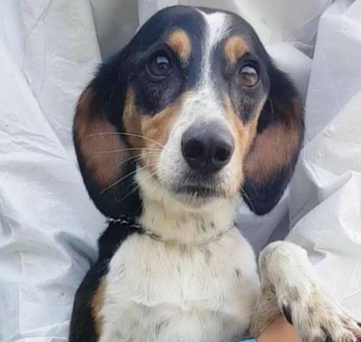 cane salva proprietario ictus
