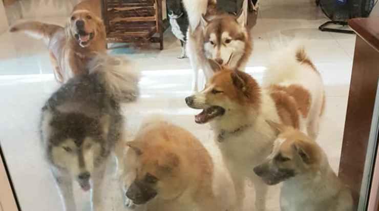 la famiglia canina della ragazza (Foto Facebook)