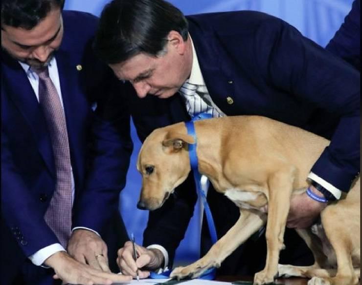 maltrattamenti animali domestici bolsonao brasile