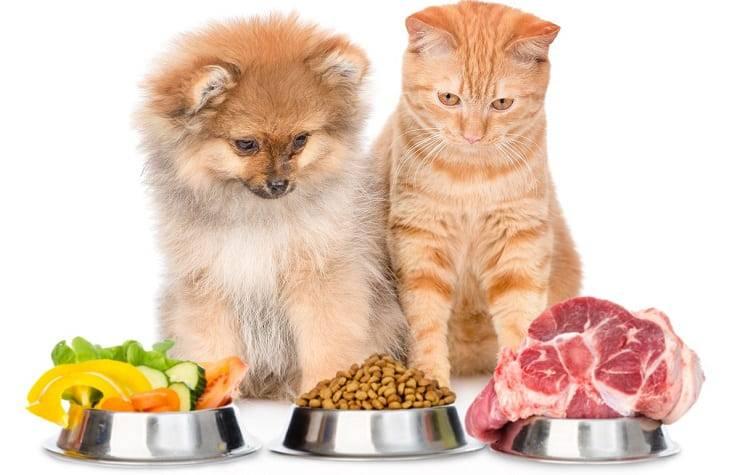 Alimentazione cani e gatti