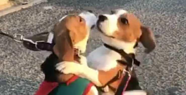 """""""Ti voglio bene.."""" (Foto video)"""