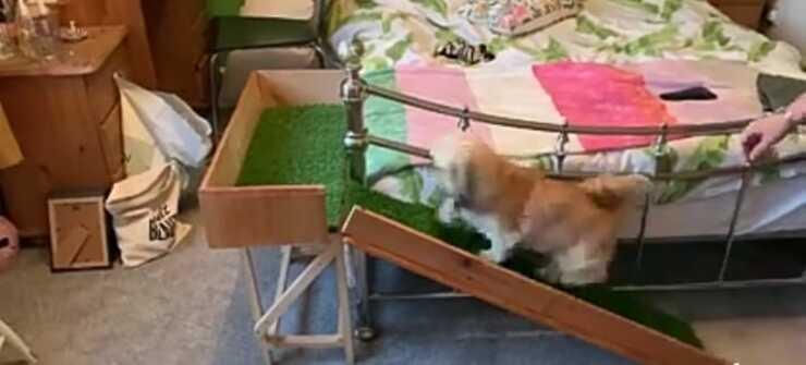 Il cane sulla rampa (Foto video Facebook)