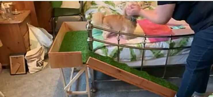 La cagnolina sul letto (Foto video Facebook)