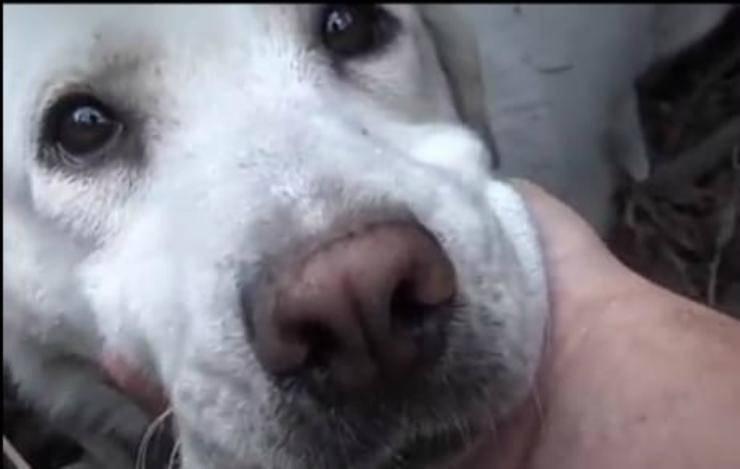 cagnolina espressiva (Foto video)