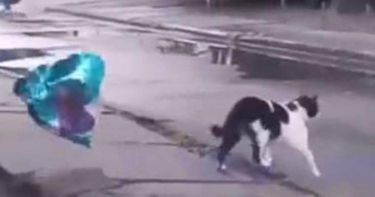 Il gatto con il palloncino a cuore (Foto video)