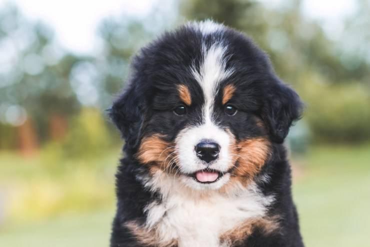 Rendere più fedele il nostro cane