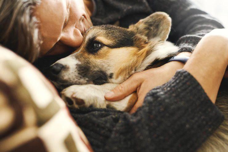 cane freddo cani inverno autunno