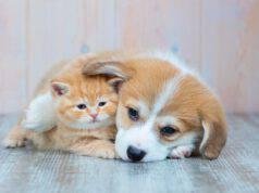 cane e gatto alternative sterilizzazione