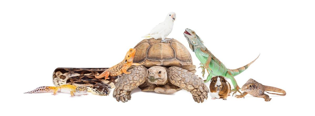 Quali animali è vietato tenere in casa? (Foto Adobe Stock)