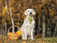 Il cane ha mangiato l'uva