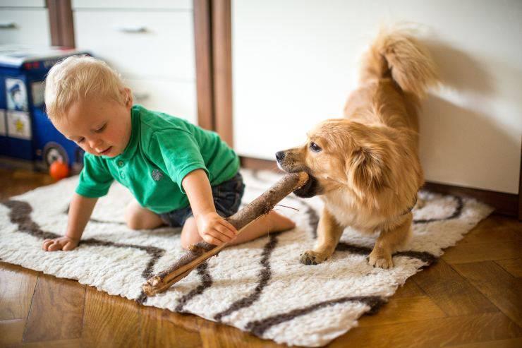 Bambino gioca con il cane