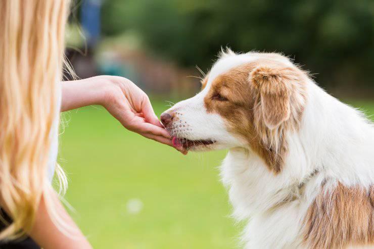 Il cane mangia dalla mano