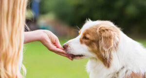 Cosa fare se il cane mangia solo dalla mano