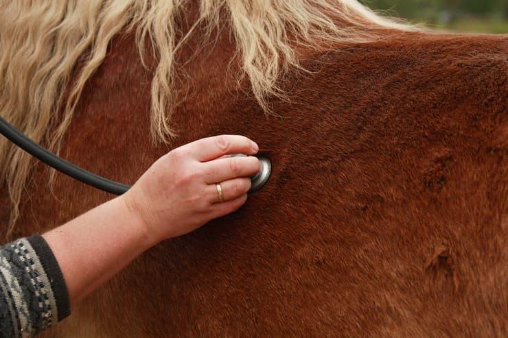 Cavallo a visita dal veterinario (Foto Adobe Stock)