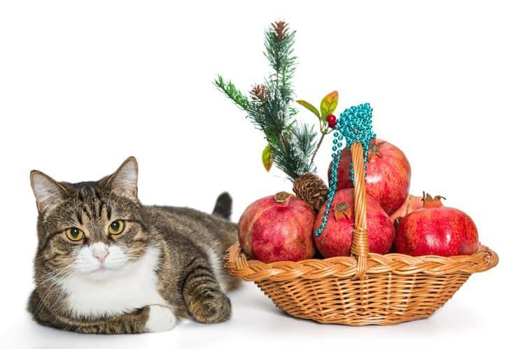 Il gatto può mangiare il melograno? (Foto Adobe Stock)