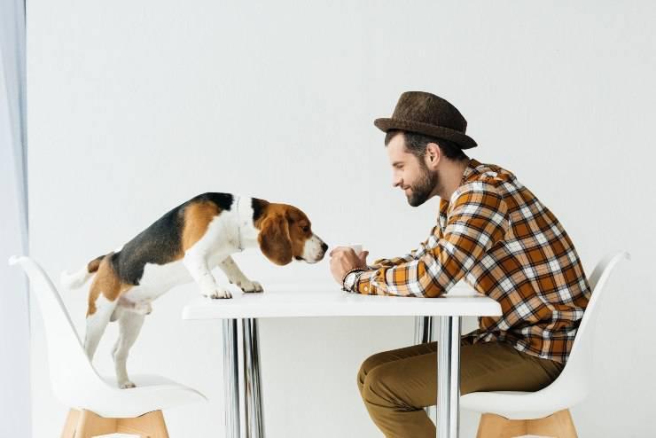 Cane sul tavolo