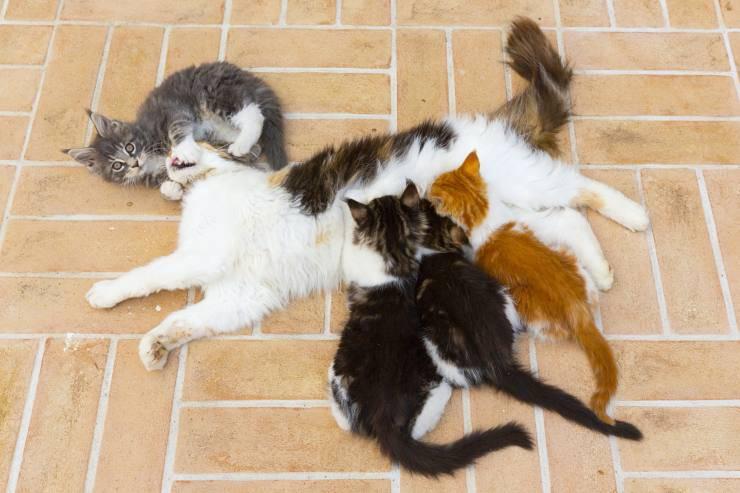 Mamma gatta dopo il parto