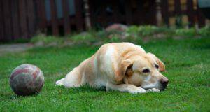 Lasciare il cane in giardino è reato? (Foto Adobe Stock)