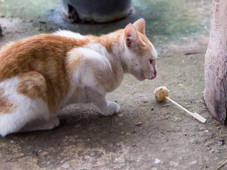 Ricette per gatti fatte dai bambini