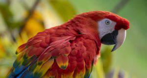 Animali esotici che si possono tenere in casa (Foto Adobe Stock)