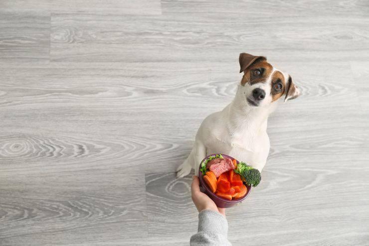 Ricette per cani: risotto alle verdure