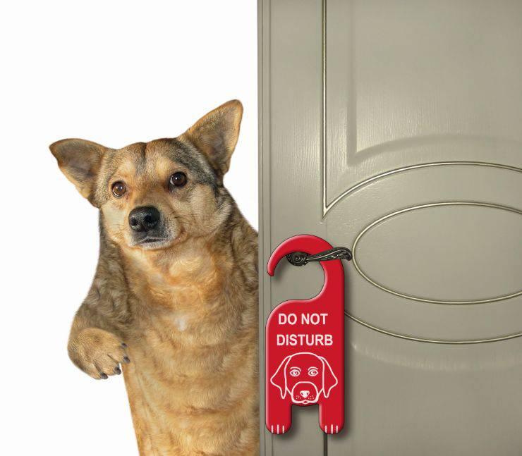 Il cane apre le porte