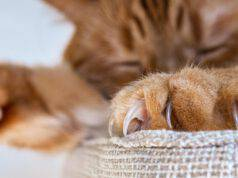 Le unghie del gatto