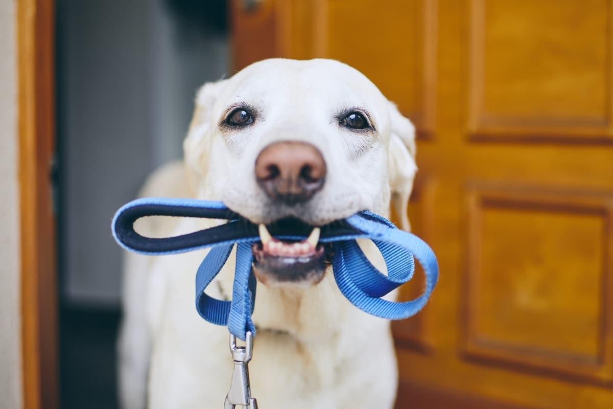 Passeggiata con il cane a norma di legge (Foto Adobe Stock)