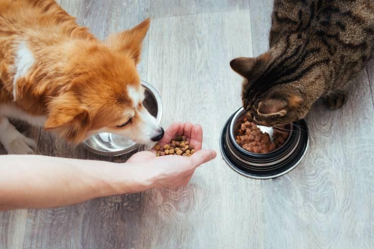 Cane e gatto che mangiano