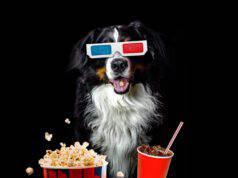 Il cane può mangiare i popcorn? (Foto Adobe Stock)