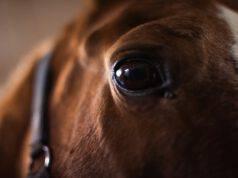 Come calmare un cavallo spaventato (Foto Adobe Stock)
