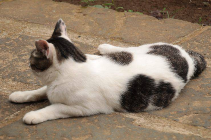 Il gatto ha la coda rotta