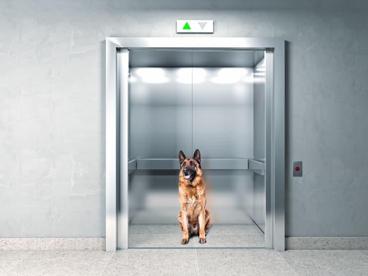 cane ascensore condominiale (Foto Adobe Stock)