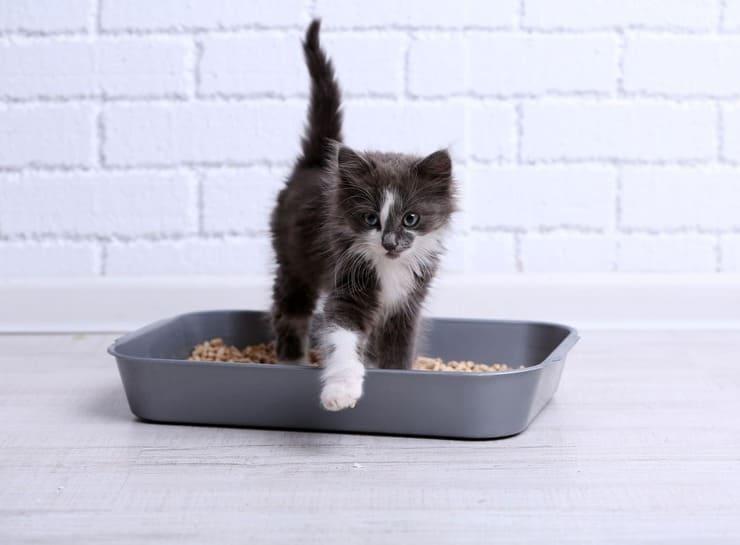 raccogliere urine gatto