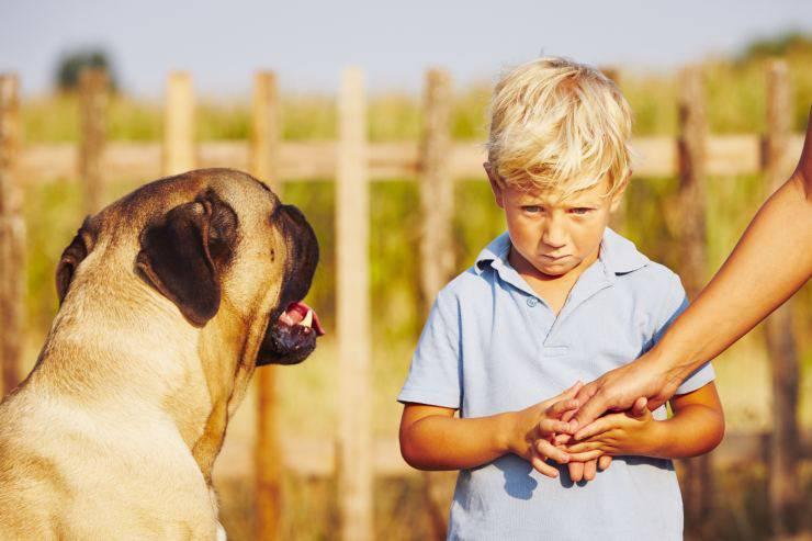 Il cane attacca i bambini