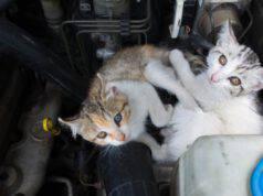 come aiutare un gatto ad uscire dal motore