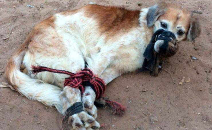 cane abbandonato zampe legate