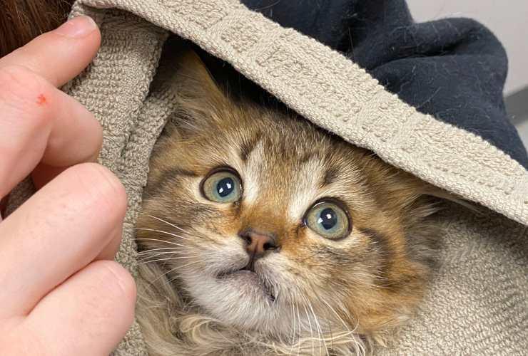 gatto zampe coda congelate
