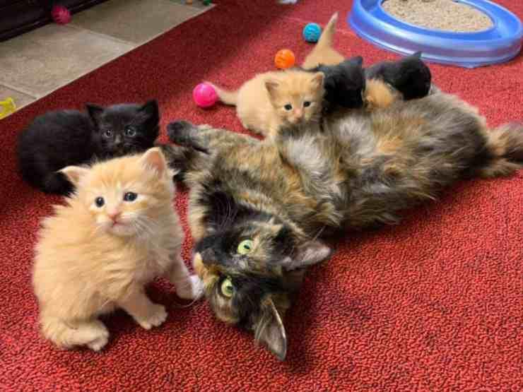 Caki, la gattina in attesa abbandonata in un tubo di scarico (foto Facebook)