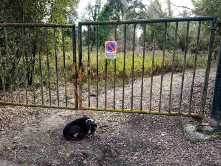 Cane abbandonato è stato trovato legato a un cancello (foto Facebook)