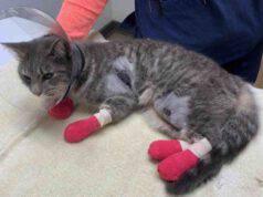 Mercy, la gattina gettata fuori dal finestrino (foto Facebook)