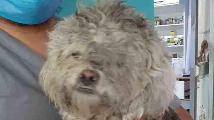 Brooky, il cane abbandonato che ha vissuto sei mesi in un parco (foto Facebook)