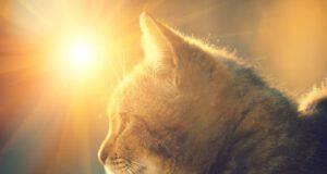 Ciclo riproduttivo del gatto (Foto Adobe Stock)
