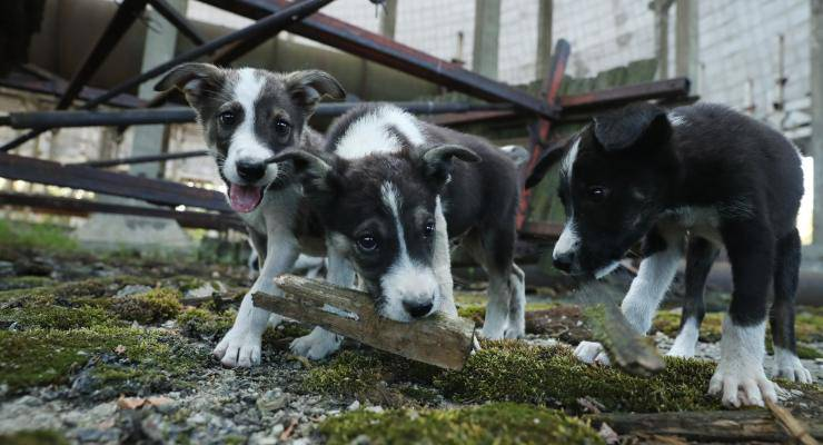 abbandoni animali cani multa