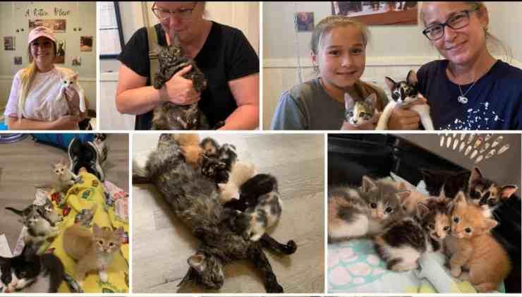 Gattina abbandonata insieme ai suoi cuccioli (foto Facebook)