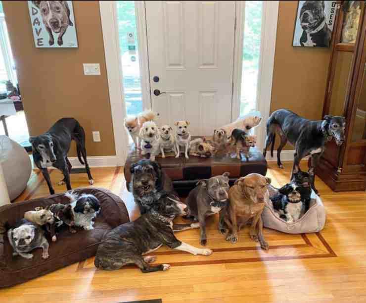20 cani randagi trovano una casa (foto Facebook)